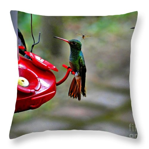 Mindo Throw Pillow featuring the photograph Lots Of Company Arriving by Al Bourassa