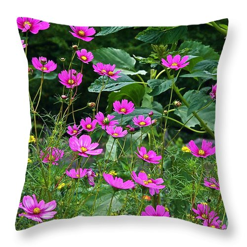 Cosmos Throw Pillow featuring the photograph Lots Of Cosmos by Byron Varvarigos