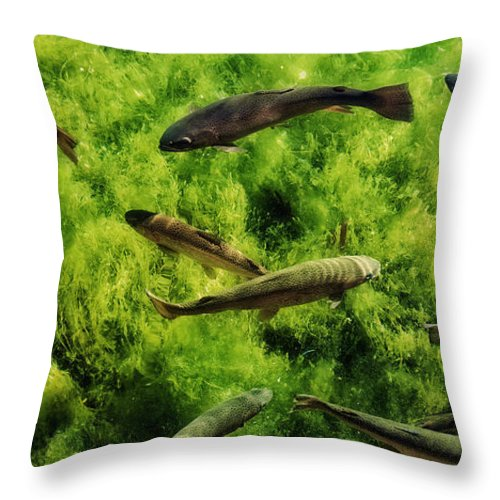 Trout Throw Pillow featuring the photograph Lots Of Trout by Sandra Selle Rodriguez