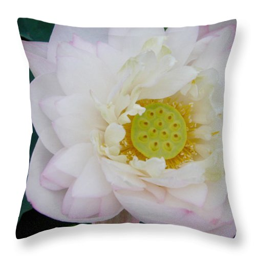 Lotus Throw Pillow featuring the photograph Lotus Blooming by Doveen Schecter