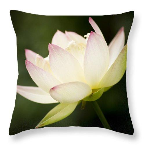 Lotus Throw Pillow featuring the photograph Lotus Glow by Priya Ghose