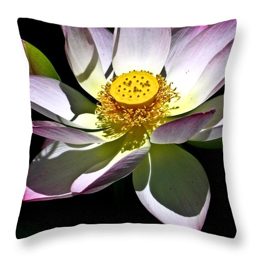 Lotus Throw Pillow featuring the photograph Lotus Of The Night by Douglas Barnett