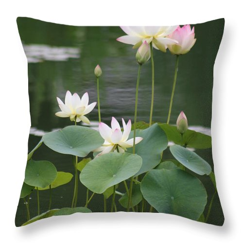 Lotus Throw Pillow featuring the photograph Lotus Patch by Christiane Schulze Art And Photography