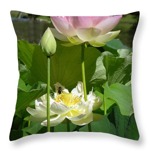 Lotus Throw Pillow featuring the photograph Lotuses in Bloom by John Lautermilch