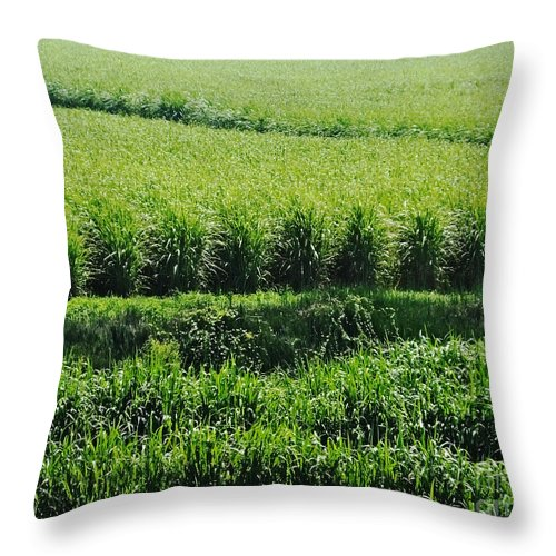 Agriculture Throw Pillow featuring the photograph Louisiana Cane Field by Lizi Beard-Ward