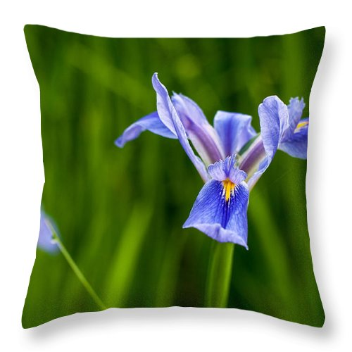 Andy Crawford Throw Pillow featuring the photograph Louisiana Swamp Beauties by Andy Crawford