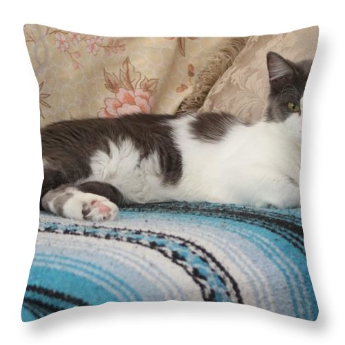 Cat Throw Pillow featuring the photograph Lounging Cat by Michelle Powell