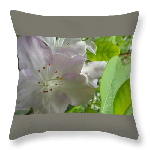 Throw Pillow featuring the photograph Love Light by M Michele Herrick