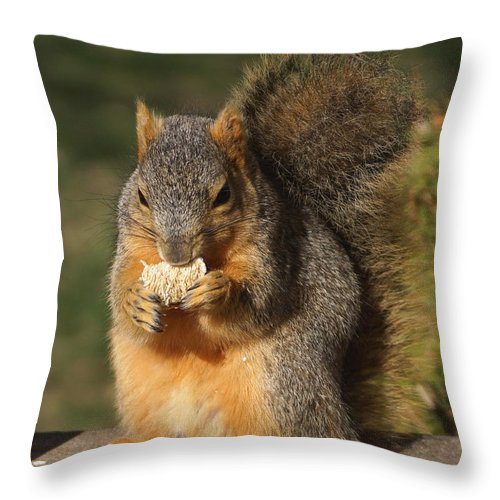 Squirrel Throw Pillow featuring the photograph Love Those Frosted Mini Wheats by Lori Tordsen