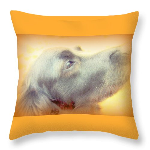 Dog Throw Pillow featuring the photograph Who Will Love Me Forever When You Are Gone by Hilde Widerberg