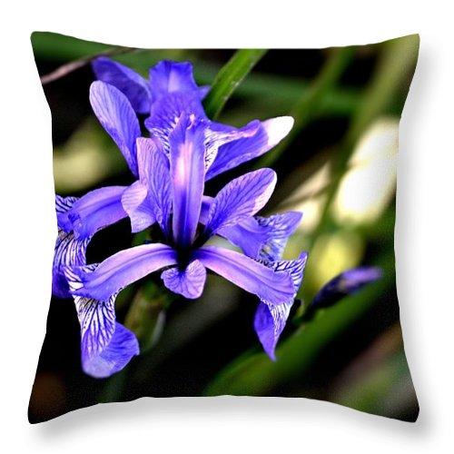Iris Throw Pillow featuring the photograph Lovely Iris by Tara Potts