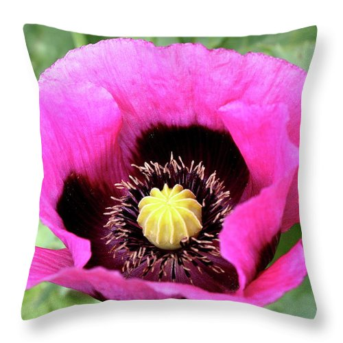 Poppy Throw Pillow featuring the photograph Lovely Springtime by Christiane Schulze Art And Photography