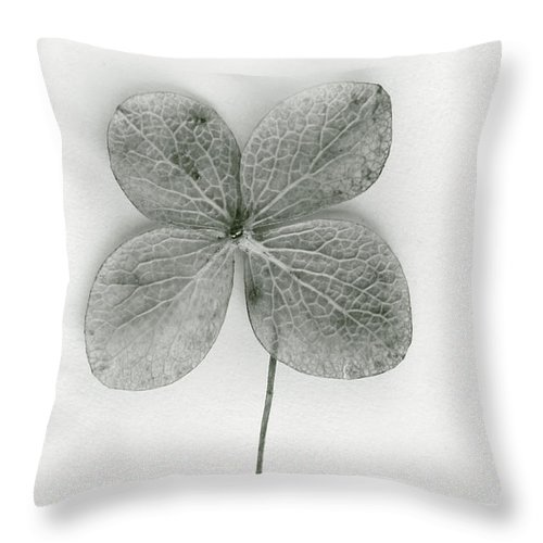 Four-leaf; Clover; Green; Leaf; Luck; Lucky; Plant; Superstition; Symbolic; Symbol; Charm; Fortune; Good Luck; Ireland; Irish; Shamrock Throw Pillow featuring the photograph Luck by Margie Hurwich