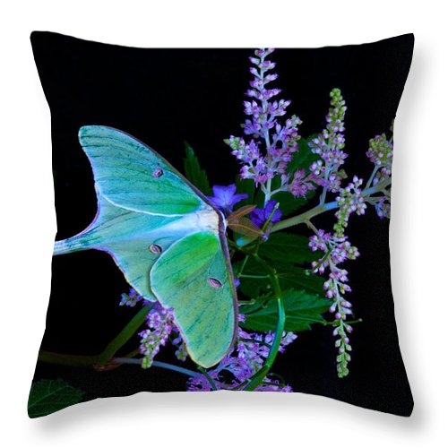 Luna Moth Throw Pillow featuring the photograph Luna Moth Astilby Flower Black by Randall Branham