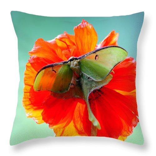 : Throw Pillow featuring the photograph Luna Moth On Poppy Aqua Back Ground by Randall Branham