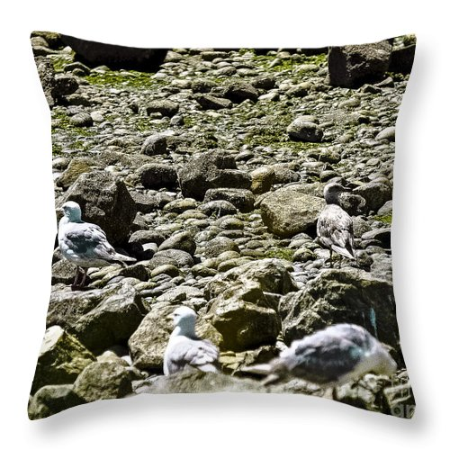 Beach Throw Pillow featuring the photograph Lunch With The Gulls by David Fabian