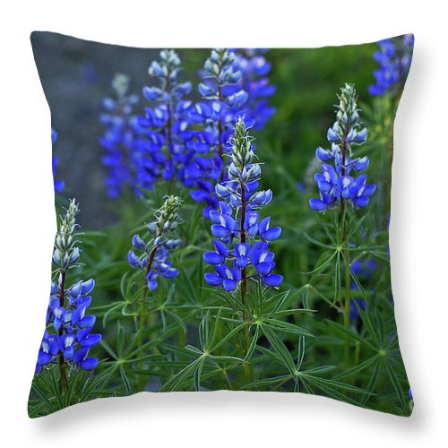 Crested Butte Throw Pillow featuring the photograph Lupine Family by Kelly Black