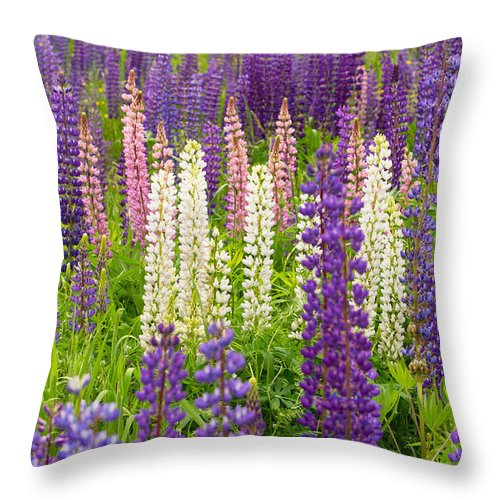 Flowers Throw Pillow featuring the photograph Lupine Potpourri by Shell Ette