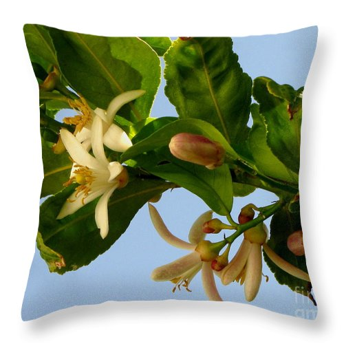 Lemon Blossoms Throw Pillow featuring the photograph Luscious Lemon Promise by Marilyn Smith