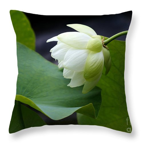 Macro Throw Pillow featuring the photograph Luscious Lotus by Sabrina L Ryan
