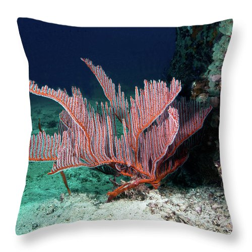 Underwater Throw Pillow featuring the photograph Lyre Gorgonian, Harp Coral by Gerard Soury