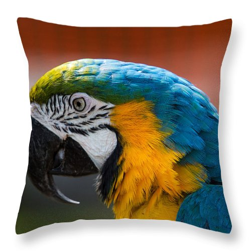 Birds Throw Pillow featuring the photograph Macaw Tropical Bird by Eleanor Abramson
