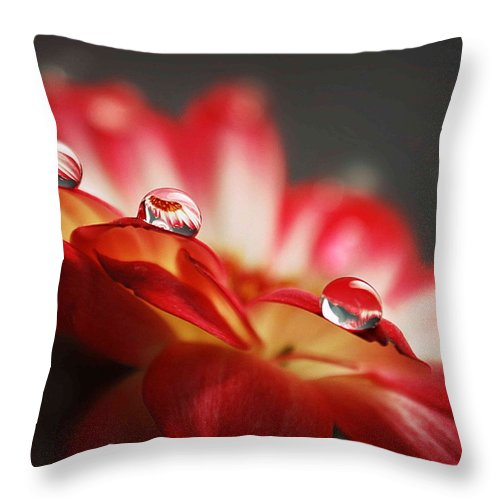 Floral Throw Pillow featuring the photograph Macro Drops by Aza Johnson