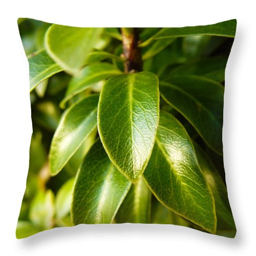 Photography Throw Pillow featuring the photograph Macro Leaves by Fabien White