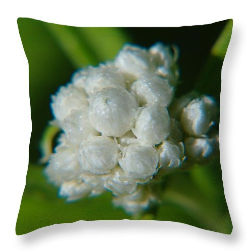 Macros. Floral Throw Pillow featuring the photograph Macro Of A White Bulb by Jeff Swan