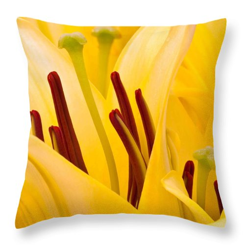 Floral Throw Pillow featuring the photograph Macro Oriental Lilies by Aza Johnson