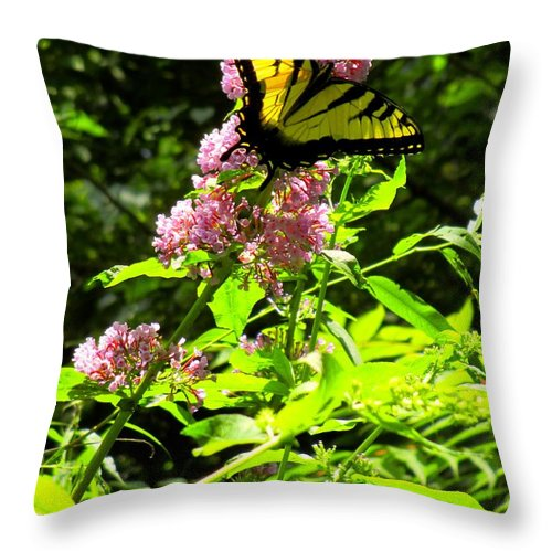 Butterfly Throw Pillow featuring the photograph Magenta Perch by Kendall Kessler