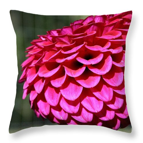 Flower Throw Pillow featuring the photograph Magenta's Orb by Susan Herber