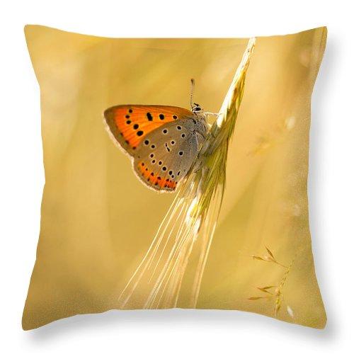 Orange Throw Pillow featuring the photograph Magic Garden II by Jaroslaw Blaminsky