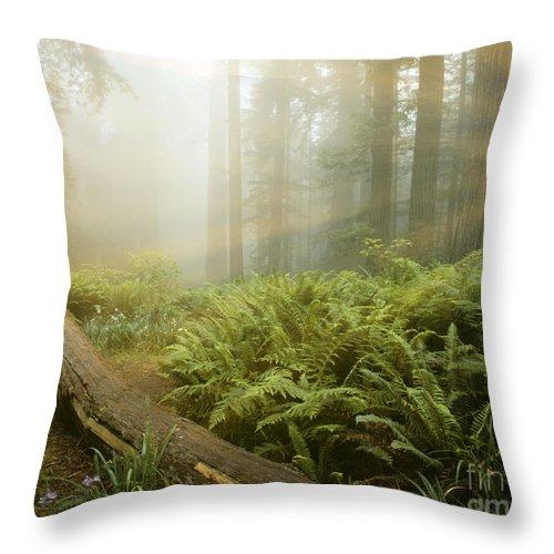 Usa Throw Pillow featuring the photograph Magic Of Dawn by Edmund Nagele