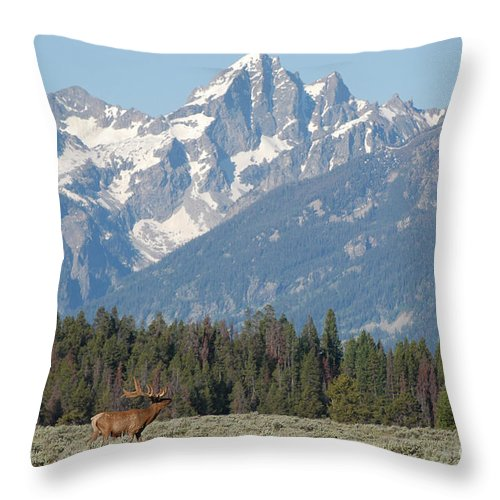 Elk Throw Pillow featuring the photograph Magnificent Elk by Joan Wallner