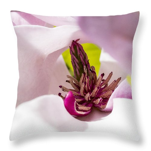 Arboretum Throw Pillow featuring the photograph Magnolia Flower by Steven Ralser