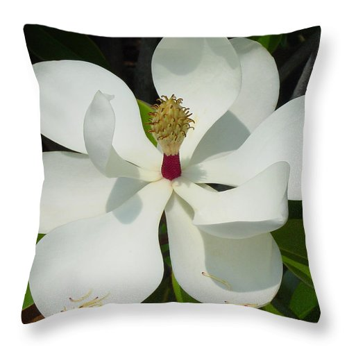 Magnolia Grandiflora Throw Pillow featuring the photograph Magnolia II by Suzanne Gaff