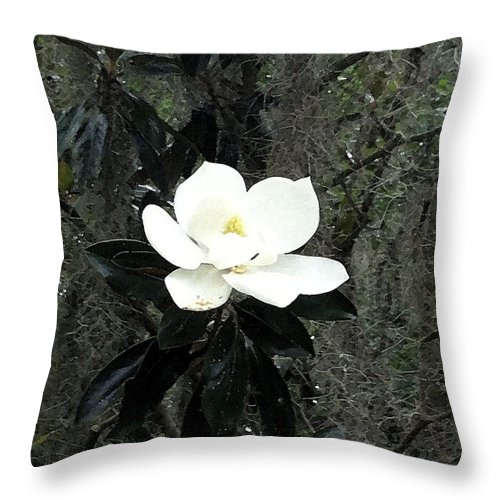 Magnolia Throw Pillow featuring the photograph Magnolia by Marian Palucci-Lonzetta