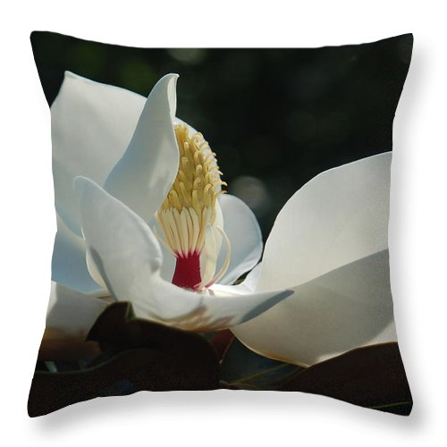 Magnolia Throw Pillow featuring the photograph Magnolia Tiny Gem by Suzanne Gaff