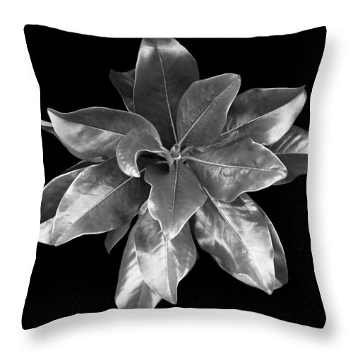 Magnolia Throw Pillow featuring the photograph Magnolia Tree Leaves by Marilyn Hunt