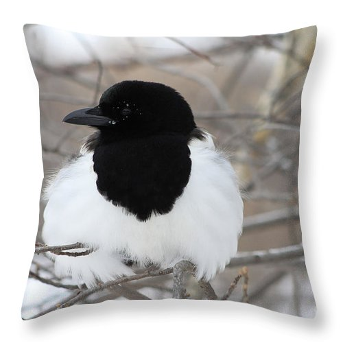 Bird Throw Pillow featuring the photograph Magpie Profile by Alyce Taylor