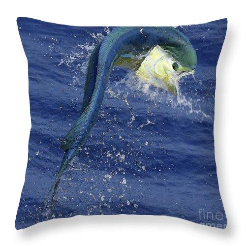 Dorado Photographs Throw Pillow featuring the photograph Mahi Madness by Bryan Toney