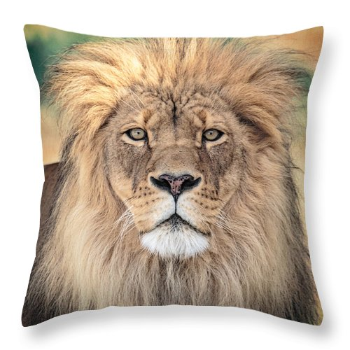 Lion Throw Pillow featuring the photograph Majestic King by Everet Regal