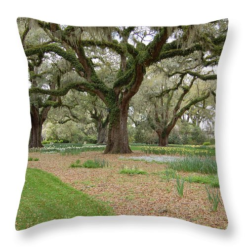 Live Oak Throw Pillow featuring the photograph Majestic Live Oaks In Spring by Suzanne Gaff