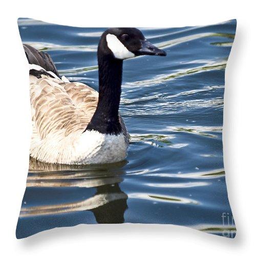 Portrait Throw Pillow featuring the photograph Majestic Mallard by David Fabian