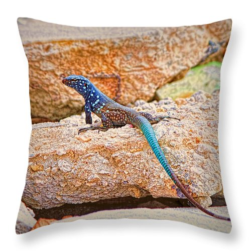 Bonaire Throw Pillow featuring the photograph Male Bonaire Whiptail Lizard by Photos By Cassandra