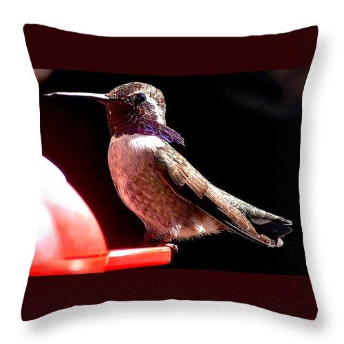 Hummingbird. Palm Desert Throw Pillow featuring the photograph Male Costa Hummingbird On Perch by Jay Milo