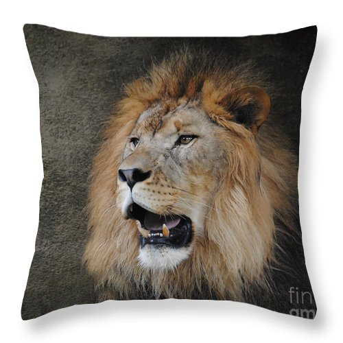 Animal Throw Pillow featuring the photograph Male Lion II by Jai Johnson