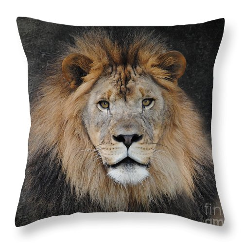 Animal Throw Pillow featuring the photograph Male Lion Portrait by Jai Johnson