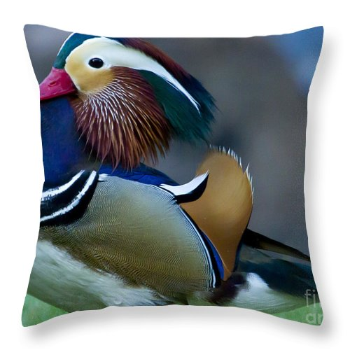 Duck Throw Pillow featuring the photograph Male Mandarin Duck-signed-#8301 by J L Woody Wooden